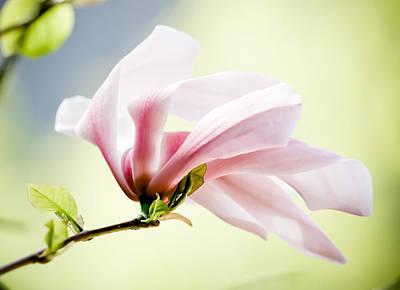 Photograph - Pink Flower Stem by Athena Mckinzie