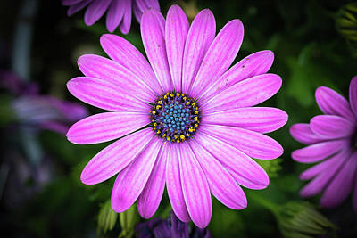 Photograph - Pink Flower Top Down View by William Freebilly photography