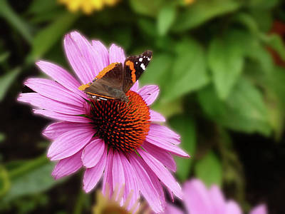 Photograph - Pink Flower With Butterfly by Alan Socolik
