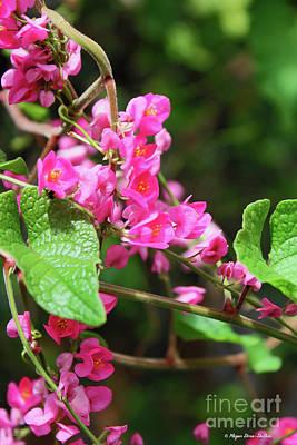 Photograph - Pink Flowering Vine3 by Megan Dirsa-DuBois