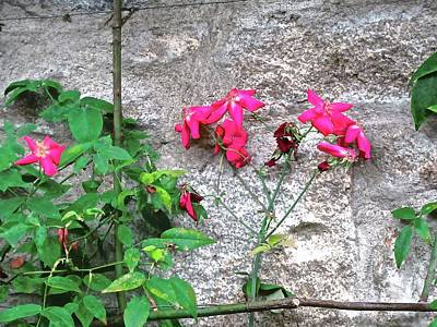 Photograph - Pink Flowers Against A Grey Wall by Stephanie Moore