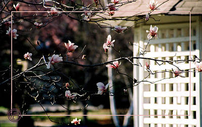 Pink Flowers At Gazebo Art Print by Helena M Langley