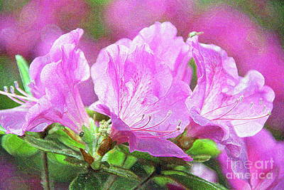 Photograph - Pink Flowers by Inspirational Photo Creations Audrey Woods