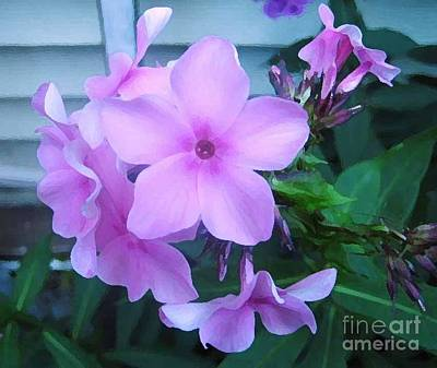Photograph - Pink Flowers In The Garden by Reb Frost