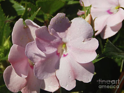 Photograph - Pink Flowers P79 by Monica C Stovall