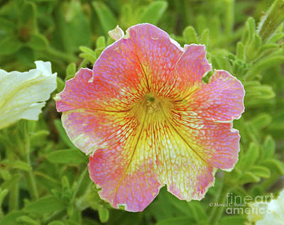 Photograph - Pink Flowers P80 by Monica C Stovall