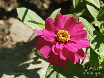 Photograph - Pink Flowers P81 by Monica C Stovall