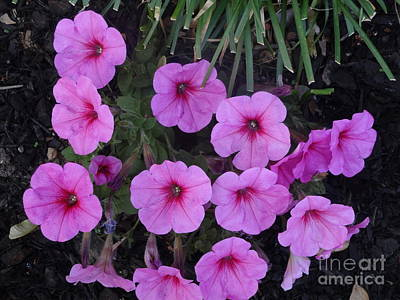 Photograph - Pink Flowers by Rod Ismay