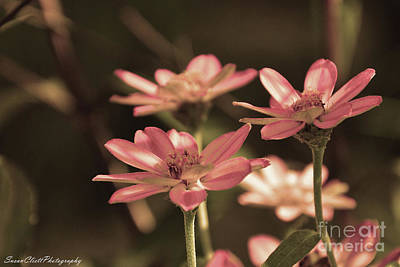 Photograph - Pink Flowers by Susan Cliett