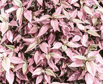 Photograph - Pink Foliage by Andrea Anderegg