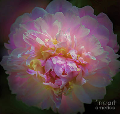 Photograph - Pink Fragrance by Elizabeth Winter