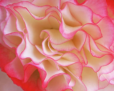 Photograph - Pink Frills - Abstract Begonia Petals by Gill Billington