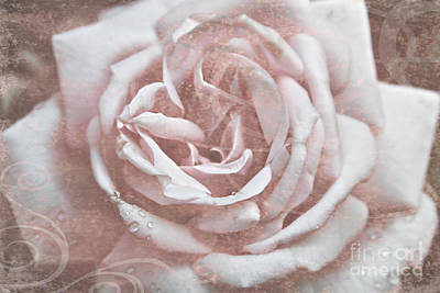 Photograph - Pink Garden Rose by Patricia Montgomery
