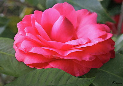 Painting - Pink Gardenia by Ellen Henneke