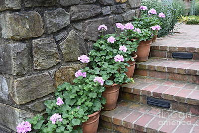 Photograph - Pink Geraniums  by Jeannie Rhode