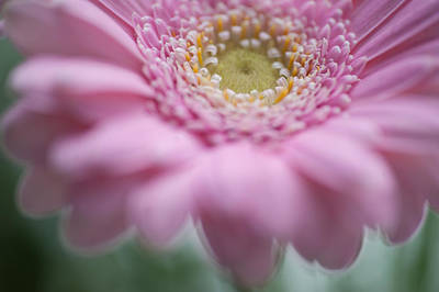 Photograph - Pink Gerbera 3d by Jenny Rainbow