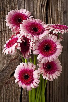Pink Gerbera Daisies Art Print by Garry Gay