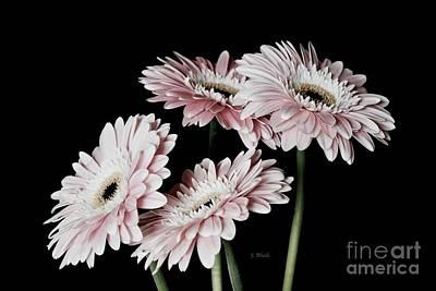 Photograph - Pink Gerbera Daisy Bouquet by Jeannie Rhode