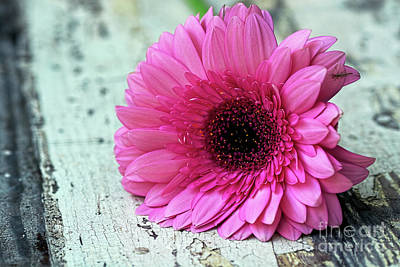 Photograph - Pink Gerbera Daisy On Old Wood By Kaye Menner by Kaye Menner