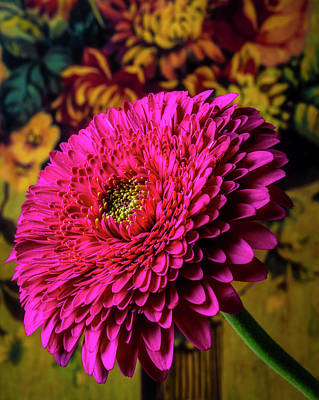 Photograph - Pink Gerbera Daisy Portrait by Garry Gay
