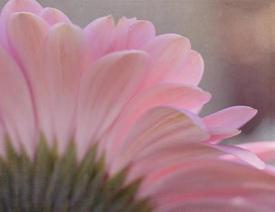 Photograph - Pink Gerbera Daisy by Teresa Wilson