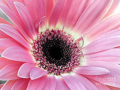 Photograph - Pink Gerbera by Janice Drew