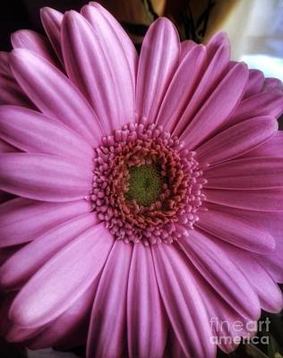 Photograph - Pink Gerbera Macro by Joan-Violet Stretch