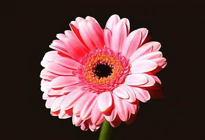 Gerbera Mixed Media - Pink Gerbera by Scott Carruthers