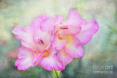 Digital Art - Pink Gladiola by Sharon McConnell