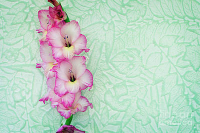 Photograph - Pink Gladiolous On Leaf Paper by Jim And Emily Bush