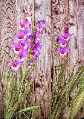 Wall Art - Photograph - Pink Gladiolus Flowers By Wood Fence Painting by David Gn