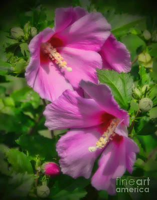 Photograph - Pink Glory by Elizabeth Winter