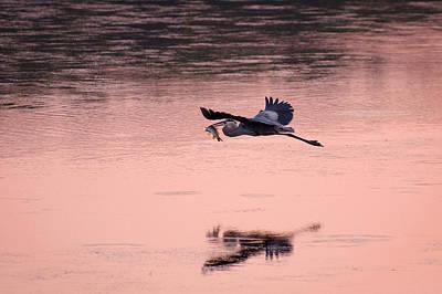 Water Photograph - Pink Glow by Benjamin DeHaven