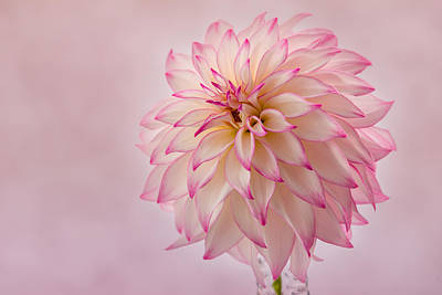 Photograph - Pink Glow by Mary Jo Allen