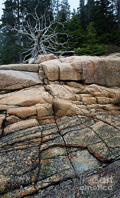 Photograph - Pink Granite And Driftwood At Schoodic Peninsula In Maine  -4672 by John Bald