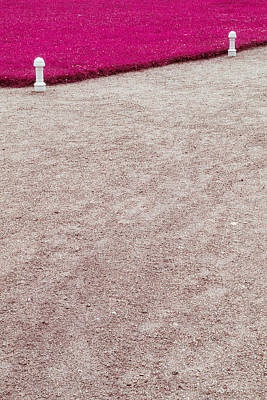 Photograph - Pink Grass by Andrey  Godyaykin