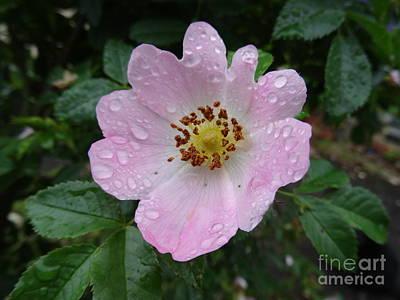 Photograph - Pink Heart Petal Rose With Raindrops by Karen Jane Jones