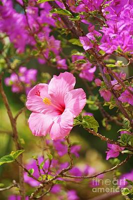 Bougainvilleas Photograph - Pink Hibiscus And Bougainvillea by John Clark