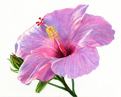Hibiscus Flower Painting - Pink Hibiscus Blossom With Blue Shadows by Sharon Freeman