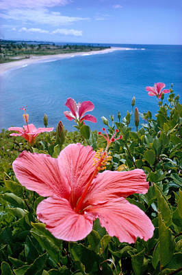 Photograph - Pink Hibiscus by David Cornwell First Light Pictures Inc - Printscapes