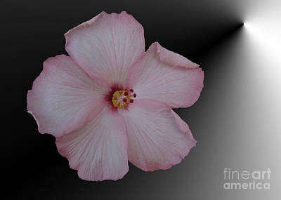 1-war Is Hell Royalty Free Images - Pink Hibiscus Royalty-Free Image by Donna Brown