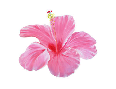 Art Print featuring the painting Pink Hibiscus by Elizabeth Lock