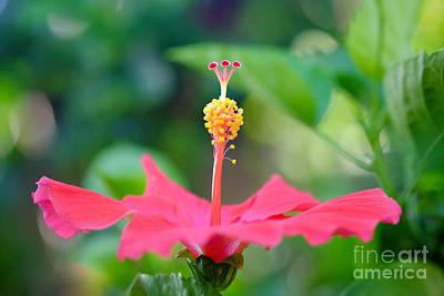 Eyzen Medina Photograph - Pink Hibiscus by Eyzen M Kim