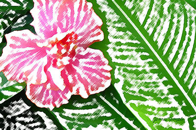 Shirt Digital Art - Pink Hibiscus by James Temple