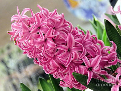 Photograph - Pink Hyacinth by Janice Drew