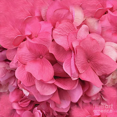 Photograph - Hydrangea Floral Petals - Romantic Pink Flower Petals  by Kathy Fornal