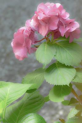 Photograph - Pink Hydrangea Romance by Deborah  Crew-Johnson