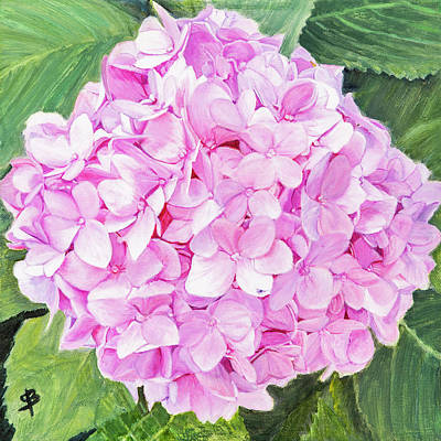 Painting - Pink Hydrangea by Sharon Bignell