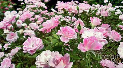 Photograph - Pink Iceberg Roses by Kaye Menner