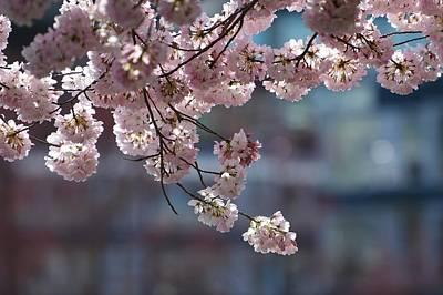 Photograph - Pink Indulgence by Fraida Gutovich